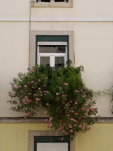 Lisboa - R. Palmira