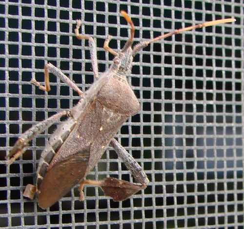 "bug • <a style=""font-size:0.8em;"" href=""http://www.flickr.com/photos/10528393@N00/499634679/"" target=""_blank"">View on Flickr</a>"