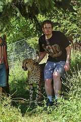 Me posing with Rangu the cheetah (Tambako the Jaguar) Tags: wild cat zoo big feline kitty fast spots bigcat spotty cheetah spotted wildcat eichberg felid gepard acinonyxjubatus acinonyx gupard jubatus rangu tambako acynonix