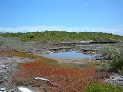 Lowland pond