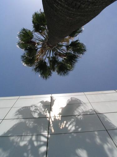 Urban Palm Tree