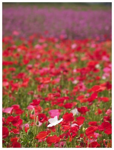 Flowers 070523 #02