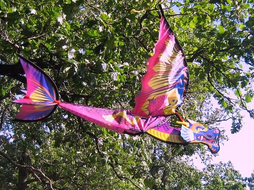 Flying Dragon in Hobo Camp