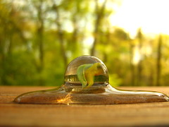 Melting (bh23) Tags: trees light sun abstract color reflection green nature water yellow melting sphere marble spilled anawesomeshot diamondclassphotographer