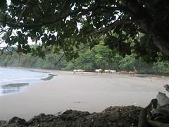 Cahuita-Playa_Negra-02