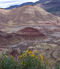 Flowers at Painted Hills (chriskruell) Tags: oregon d70s surreal paintedhills incredible