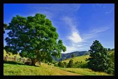 Wherrol Flat (Earlette) Tags: trees green rural nikon farm australia explore nsw wingham blueribbonwinner d80 earlette wherrolflat