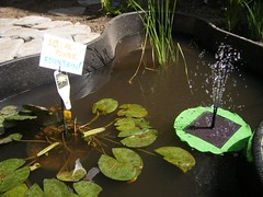 Pond (meliroo) Tags: school cambridge garden education celebration k8 urbanschool kingamigos citysprouts