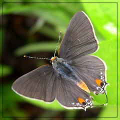 (sojourner photography) Tags: butterfly upcloseandpersonal inmygarden anawesomeshot