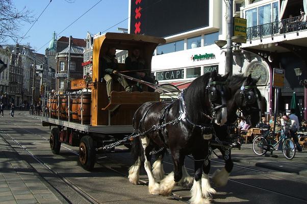 Heineken dray horses