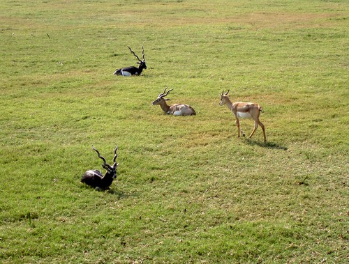 Deers resting on the grass