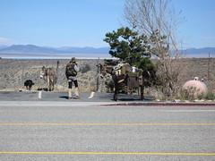 The Mule Guy in Lee Vining