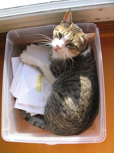 Un chat dans une boite. Il squatte !