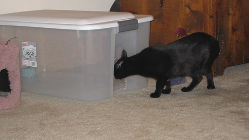 cat contraption 001