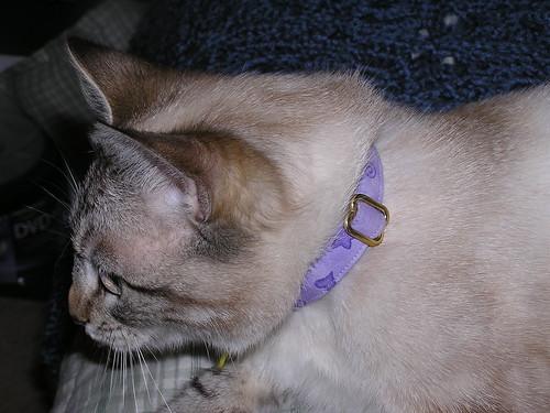 Suzy Profile