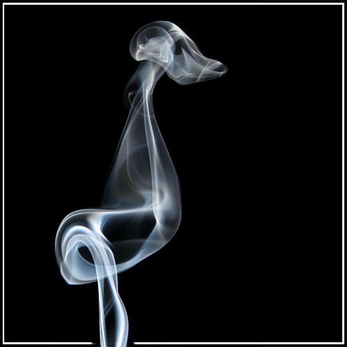 smoke ~ prehistoric bird