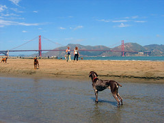 San Francisco Dog