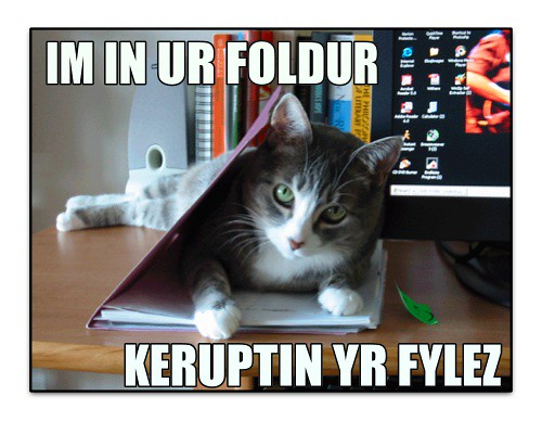 My first lolcat