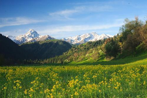 フリー画像| 自然風景| 山の風景| 花畑| 菜の花畑| 中国風景|      フリー素材|