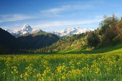 [フリー画像] [自然風景] [山の風景] [花畑] [菜の花畑] [中国風景]      [フリー素材]
