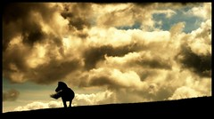 Alone (andrewlee1967) Tags: horse hill clouds windy werneth cheshire andrewlee1967 uk canon400d england landscape focusman5 andrewlee wernethlow hyde