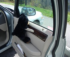 Bear on car door