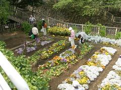 音無川親水公園-06.コミュニティガーデン