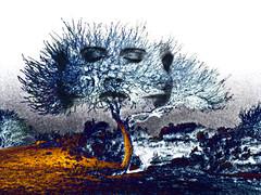 Once the seed was planted... (AzRedHeadedBrat) Tags: blue arizona orange southwest tree face yellow landscape interestingness eyes weeds colorful desert tucson spirit surreal brush explore negative inverted solarized mothernature lakesidepark sharleneshappart artlibre impressedbeauty treenymphs