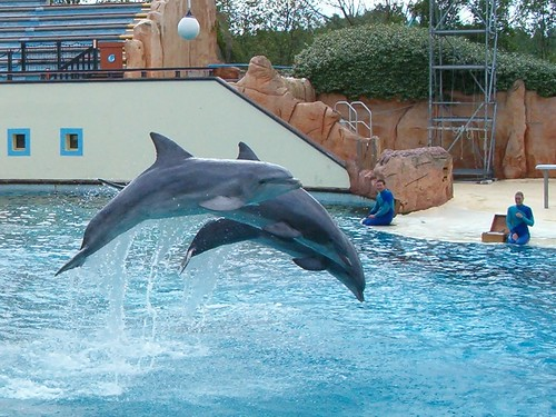 Dolphin Show wallpapers 4