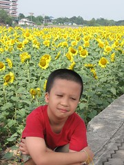 Boy in Sunflower field Red and Yellow Collections