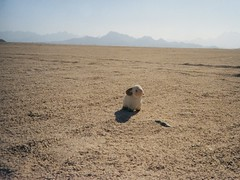 Standing on the desert plain 1 - Youssouf in t...
