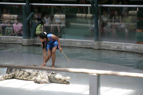 Lady alligator wrestler