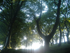 (jossjones) Tags: trees light nature leaves forest landscape shadows natur coed dail cysgodion coedwig olau