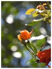 Rose 070520 #25