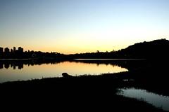 Capivara do Barigui (raquelsantana) Tags: sunset prdosol capivara barigui arquivoraquelsantana