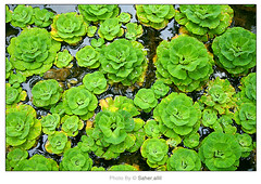 Ocean Green  ,, (Nasser Bouhadoud) Tags: ocean green texture water canon river thailand 350d nasser saher  allil