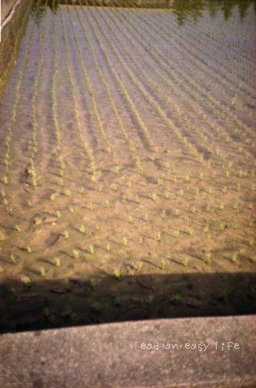 田植え2007