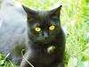 Baden bei Wien Umgebung (arjuna_zbycho) Tags: blackcat tuxedo tuxedocat kater hauskatze cat animal cute animals pets gato kitten feline kitty kittens pet tier haustier katzen gattini gatto chat cats kocio