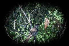birds (Glenno_snaps) Tags: birds olympus styus edits