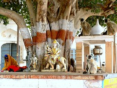 sacred banyan tree. (PIXS Angela Coles) Tags: india statue monkeys pushkar rajasthan holyman sacredtree holyshrine