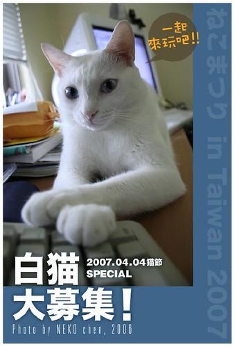 白貓大募集