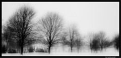 trees (I can't paint so i photograph) Tags: trees bw usa snow k canon studio photography eos exposure photoshoot 5d  hdr  cs3      studiok  thisimageisprotectedbycopyright nouseofthisimageshallbegrantedwithoutthewrittenpermissionfromroykatalan