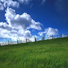 by the vineyard (ue06) Tags: california blue sky green northerncalifornia clouds vineyard vines bravo farm meadow hills agriculture soe yolocounty centralvalley grassy colusa naturesfinest yolo dunniganhills colorphotoaward impressedbeauty diamondclassphotographer flickrdiamond
