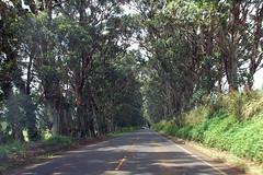 Kauai D2 (21)