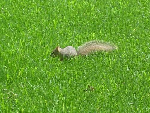 baby squirrel 3