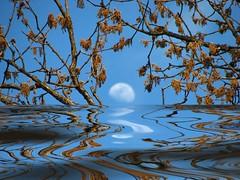 moonshadow (amiMaija (Anne Brown Photography)) Tags: artlibre wowiekazowie