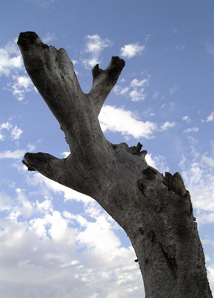 ENT-ERESTING TREES- THE ISENGUARD