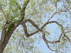 from tree to infinity (emdot) Tags: wood tree leaf timber infinity math maths mobius arbour