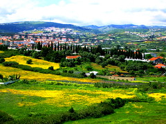 Yellow Field (Sandra_R) Tags: bridge flowers light mountains green portugal nature beauty field grass yellow clouds landscape outdoors photography spring interesting colours exterior seasons view natural lisboa background details nobody foliage explore landforms naturalworld grasslands naturesfinest loures hillsandmountains croplands springboom