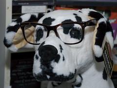 cameraphone dog moblog toy tortoiseshell buster eyeglasses dalmatian wayfarers raybans